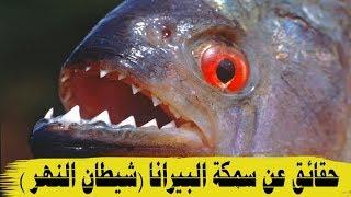سمكة البيرانا   السمكة الاخطر في العالم !! HD
