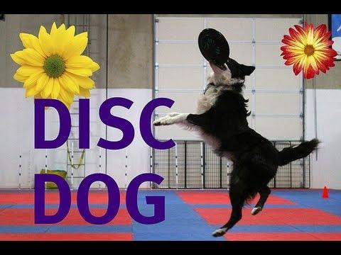 Indoor Disc Dog Playday
