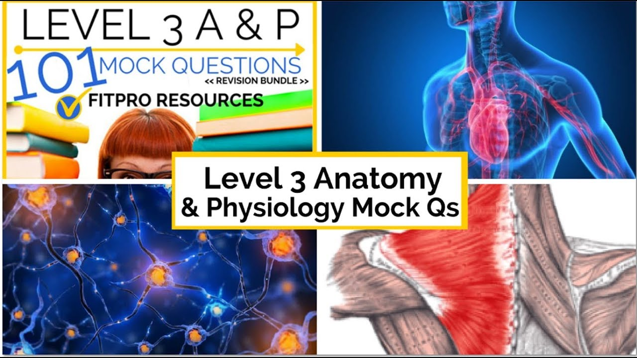 Level 3 Anatomy and Physiology Mock Questions - YouTube