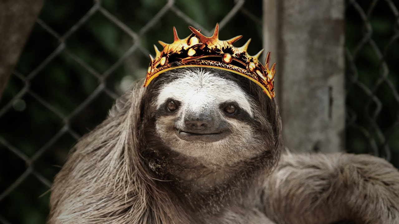 Sloths sing GAME OF THRONES theme - YouTube