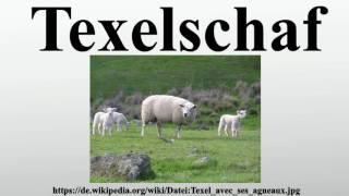 Texelschaf