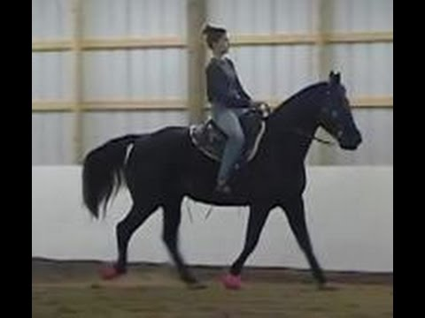 The Gaited Horse Gait Spectrum Youtube