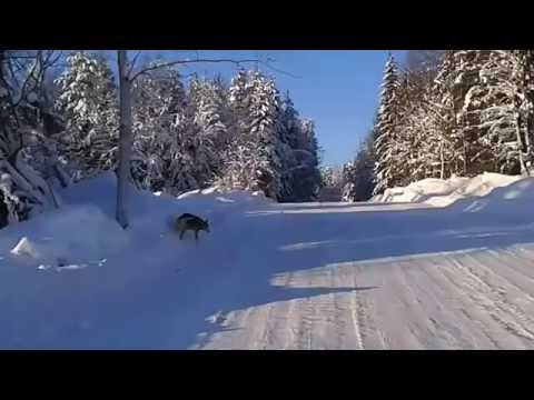 winter road Arkhangelsk region зимняя дорога Архангельская область