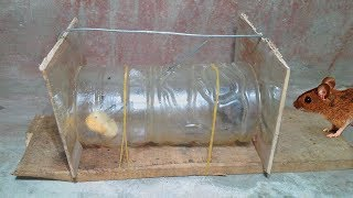Easy Mouse Rat/Trap,Building a better mouse trap,Homemade mouse trap