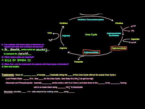 Urea Cycle (Part 5 of 5) Disorders and Treatments