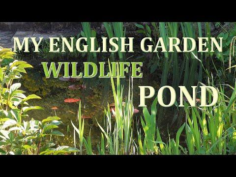 My English Garden Wildlife Pond In April 2020