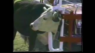 Pickup Mounted Cattle Catching Squeeze Chute