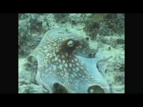 Where's The Octopus?