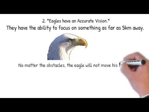 SEVEN LEADERSHIP PRINCIPLES TO LEARN FROM AN EAGLE - YouTube