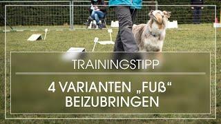 4 Varianten, Fuß gehen beizubringen | Hund lernt Fuß laufen | Hund bei Fuß gehen beibringen