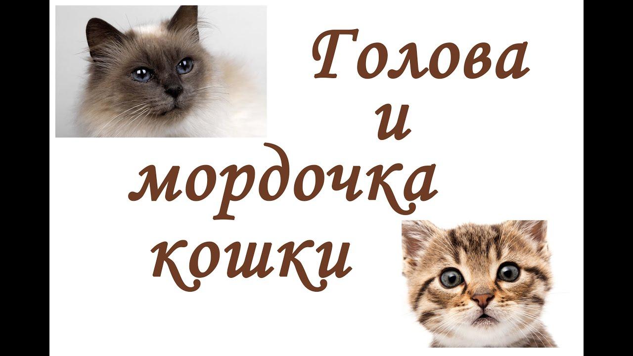 Как сделать мордочку кошки 897