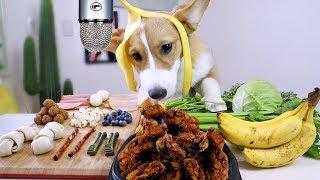 asmr-corgi-puppy-reviews-food