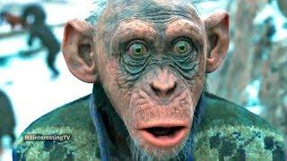 Обзор на фильм Планета обезьян Война