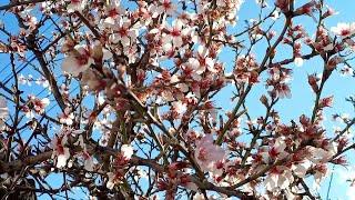 Веселое. Набережная, пляж, отзывы. Крым лето 2016 поселок Веселое.(Дорогие зрители я приехал на легендарный пляж в село Веселое Судакского района. Данный пляж находиться..., 2016-06-28T16:42:00.000Z)