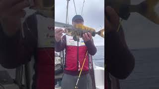 Морская рыбалка на Сахалине 1 июля 2021г