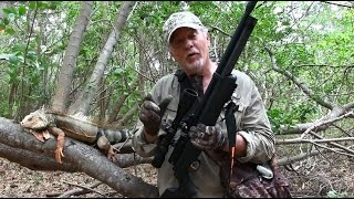 Iguana Hunt with Hatsan Airguns