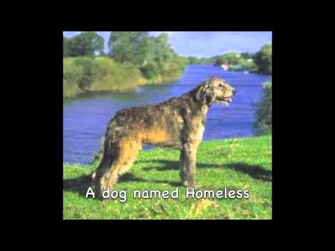 A Dog Called Homeless Book Trailer Youtube