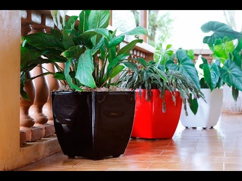 Vaso Oxford - Beleza e mobilidade para suas plantas - Loja Plantei Garden Center