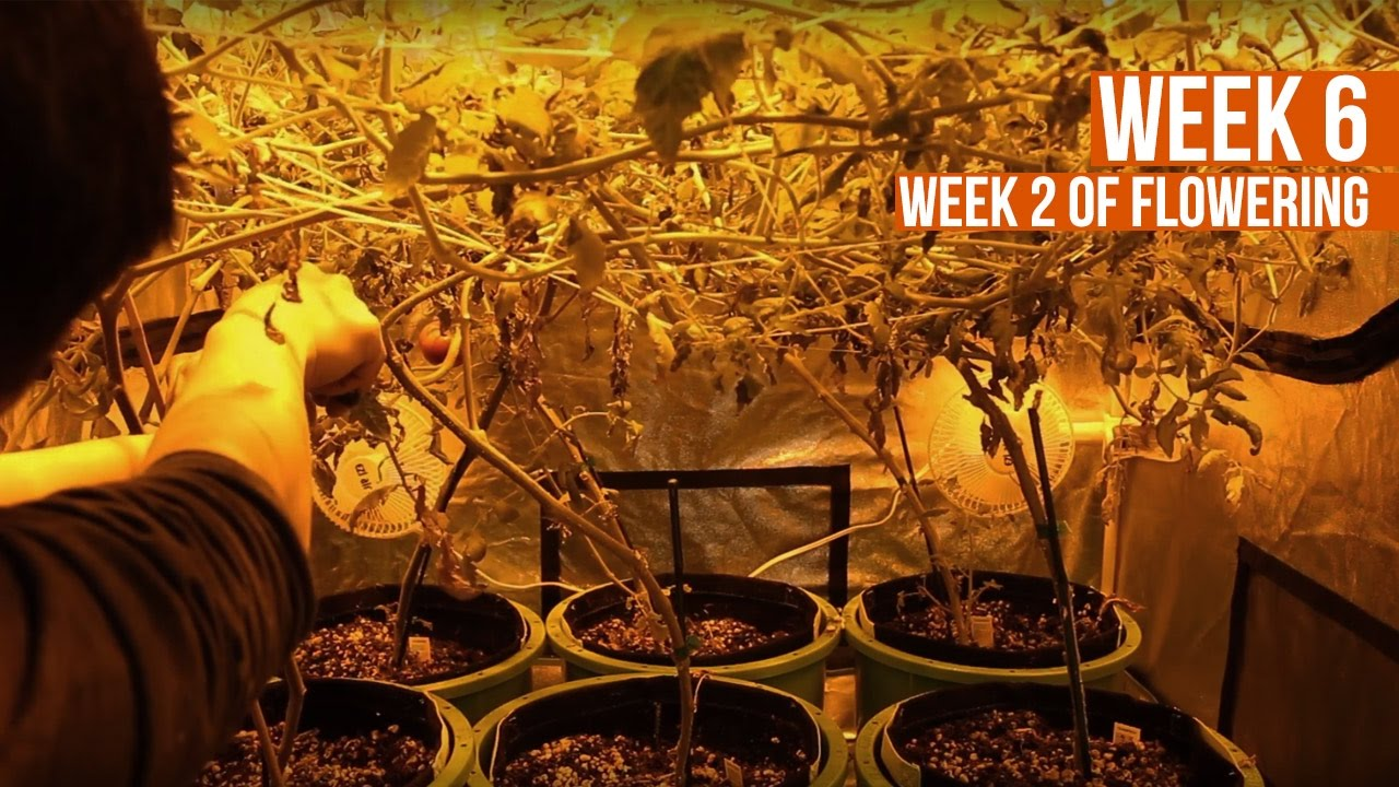 Complete Hydro Grow Tent Kit System - Week 6 Grow Journal | Hydroponic Gardening for Beginners - YouTube : soil grow tent kits - memphite.com