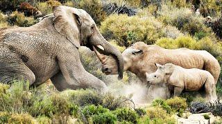 Elefante vs Rinoceronte   ¿Quién Ganaría?   EPIC VERSUS