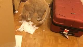 кот убирается в квартире