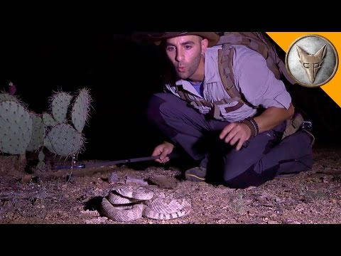 The Most Venomous Rattlesnake in the World!
