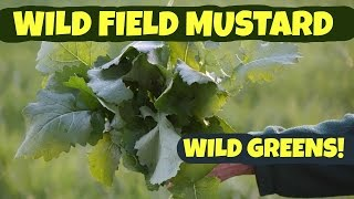 Wild Field Mustard: How to Pick and Process