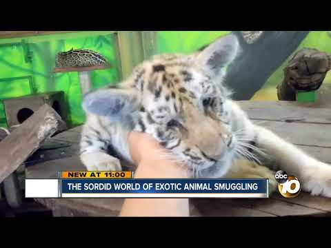 The sordid world of exotic animal smuggling