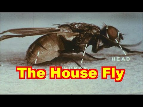 The House Fly Documentary