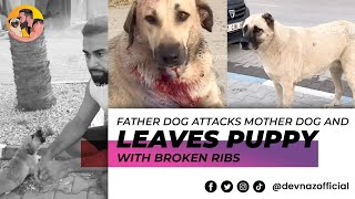 Father dog attacks mother and kills his own puppy! Full video