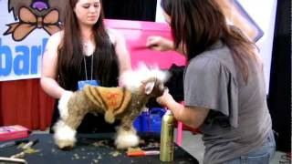Creative Grooming With Angela And Lori (extreme Colored Dogs)