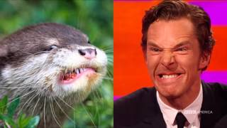Benedict Cumberbatch Otter Pics - The Graham Norton Show