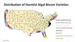 Hypoxic and Toxic: When Microscopic Algae Create Massive Problems