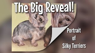 The Big Reveal! Portrait of Silky Terriers