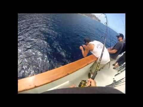 Catalina Island Fishing, 20lbs Yellowtail, live bait!