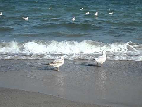 море, чайки, Одесса