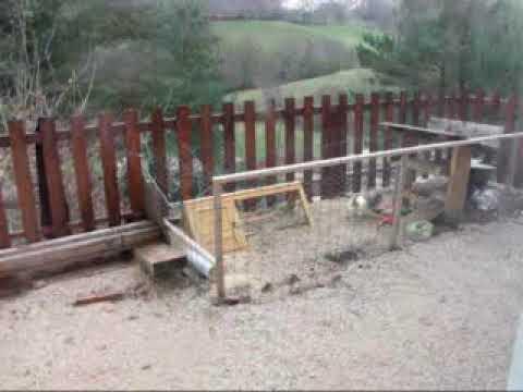 ontsnapte konijnen of niet