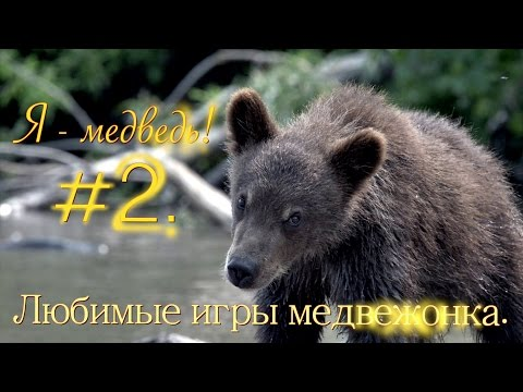 игра медвежата 2