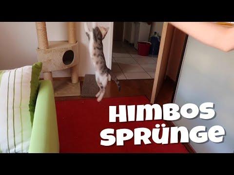 Himbos Sprünge | Himbo [4K]
