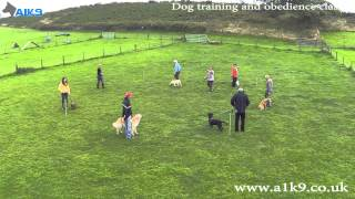 Group Dog Training Classes At A1k9 - The Professional Dog Trainers