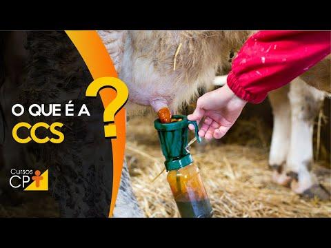 Clique e veja o vídeo O que é a CCS e qual a sua importância na qualidade do leite?