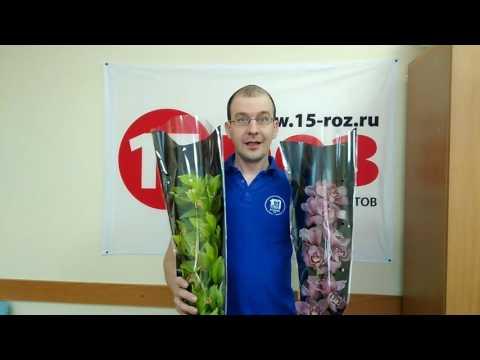 Орхидея Челябинск
