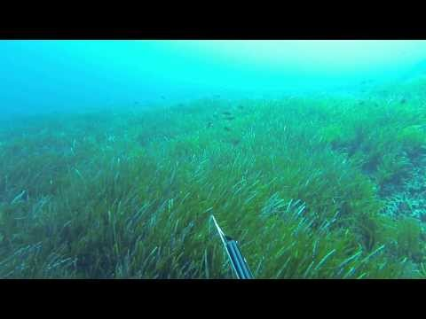 Hearing seismic surveying while underwater