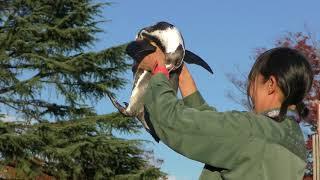 フンボルトペンギン、キングペンギン (東武動物公園) 解説はYMDおにいさ...