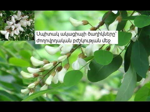Սպիտակ ակացիայի ծաղիկները` ժողովրդական բժշկության մեջ