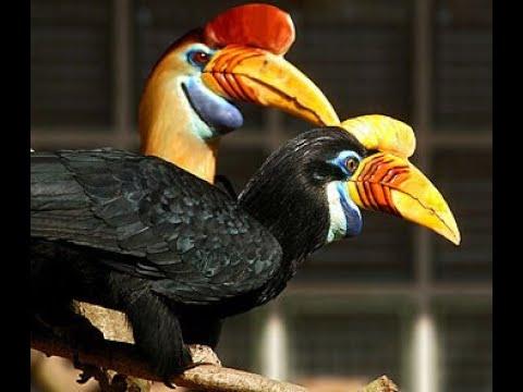 Hornbill Enrichment 1