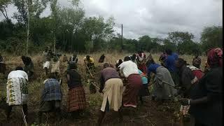 Clearance of Irrigation Field in Kangole (Napak District, Karamoja, Uganda)