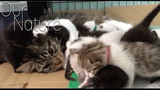 Cats Meeting Kittens For The Very First Time Compilation 2017
