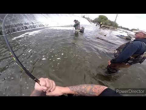 Salmon Fishing Oswego NY 2020.