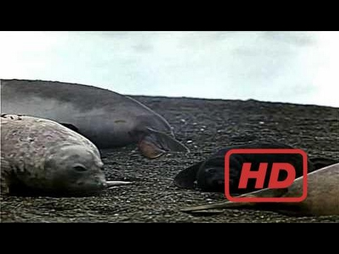 Whale Documentary Whales: An Unforgettable Journey: IMAX (1997)